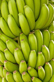 Green bananas. Close up of the green bananas taken on Tenerife banana plantation 05/10/2010 Royalty Free Stock Photography