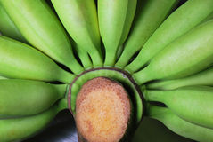 Green Bananas. A closeup photo taken on a bunch of green bananas Royalty Free Stock Photography