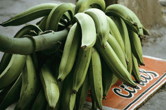 Green bananas Stock Photography