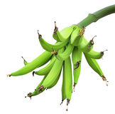 Green bananas Royalty Free Stock Image
