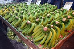 Free Green Bananas For Sale Royalty Free Stock Photo - 168626615