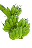 Green bananas isolate white background clipping path Stock Photography