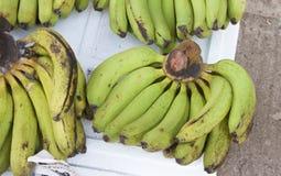 Green bananas Royalty Free Stock Photos