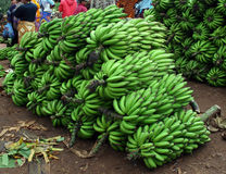 Green bananas in a pile Stock Image