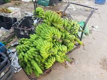 Green bananas for sale Royalty Free Stock Photography