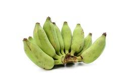 Green bananas on white background.  Stock Image
