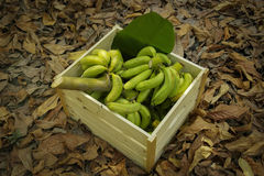 Green bananas in wood boxes Stock Photo