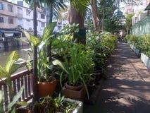 Green Bangkok. Canal in Bangkok with green plants. Thailand Royalty Free Stock Image