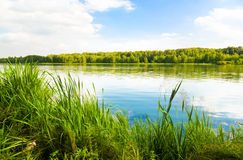 Green bank of a lake Royalty Free Stock Photos