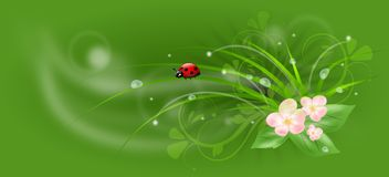Green banner. Green background with grass, ladybug, flowers and dew Stock Images