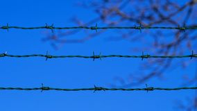 Green barbed wire fence against natural background of clear blue sky and blurred tree branch. Selective focus Stock Images