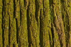 Green bark texture Royalty Free Stock Photos