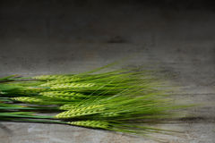 Green barley ears on dark rustic wood. With copy space for your text Stock Photos