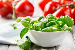 Green basil leaves Stock Images