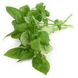 Green basil leaves Royalty Free Stock Photo