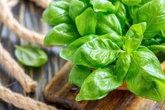 Green basil leaves closeup. Stock Photo
