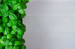 Green basil leaves. macro. Green basil leaves on wooden background with copypaste space Stock Photos