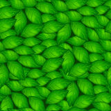 Green basil leaves in a seamless pattern Royalty Free Stock Photo