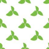 Green basil Ocimum tenuiflorum leaves seamless pattern. Vector illustration Royalty Free Stock Photography