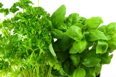 Green basil and parsley royalty free stock images