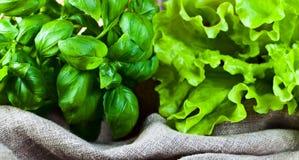 Green basil and salad Stock Photo