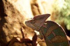Green basilisk lizard Stock Photography