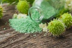 Green bath salt. Chestnut fruits. Stock Images