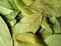 Green bay leaves. Macro bay leaves for kitchen Royalty Free Stock Images