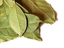 Green bay leaves on white royalty free stock image