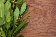 Green Bay verlässt oder Lorbeerbaumblätter und -früchte auf rustikalem hölzernem Schneidebretthintergrund Stockbilder