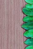 Buchtblätter auf dem hölzernen Hintergrund lizenzfreies stockbild