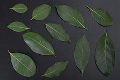 Green Bayblad fotografering för bildbyråer