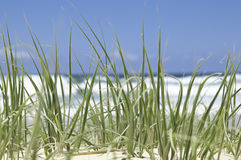 Green beach grass Stock Photos