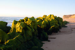 Green beach rocks. Green waterweed covered rocks by the low tide beach. Meco, Sesimbra, Portugal Royalty Free Stock Photography