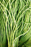 Green bean. In the market for a bundle of cowpea Stock Image