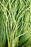 Green bean stock image