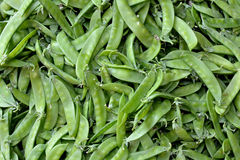 Green bean background. Green bean in featured color, shape and texture, as detail pattern or designing Royalty Free Stock Photography