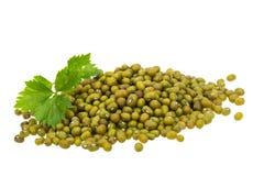 Green bean isolated Royalty Free Stock Photos