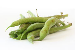 Green bean pods detail royalty free stock images