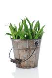 Green Bean in Rustic Bucket Stock Images