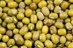 Green Bean (Vigna radiata (L.) R. Wilcz) on white background Stock Photo