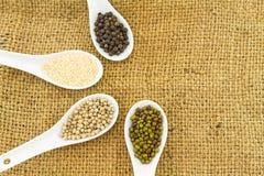 Green bean , white sesame ,black and white pepper in white ceramic spoon Royalty Free Stock Photos
