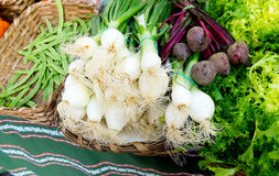 Green beans, beet, scallion and endive Royalty Free Stock Image