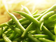 Green beans in bright sunlight Royalty Free Stock Image