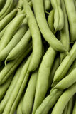 Green beans or French beans Stock Image