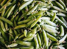Green beans. Fresh raw green beans royalty free stock photo