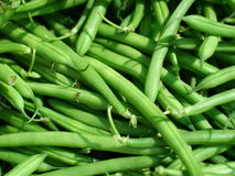 Green beans. Green fresh wax beans  background Stock Photography