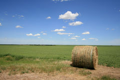 Green Beans and Hay Bale Stock Photography