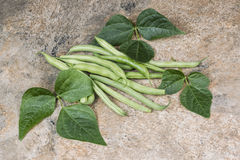 Green beans and leafs on stone Stock Photography