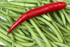 Green beans with one red pepper Stock Images